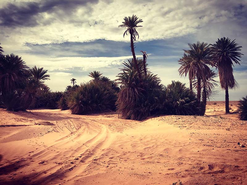 Marocco - Erg Chebbi - Merzouga - Oasi di Saf Saf