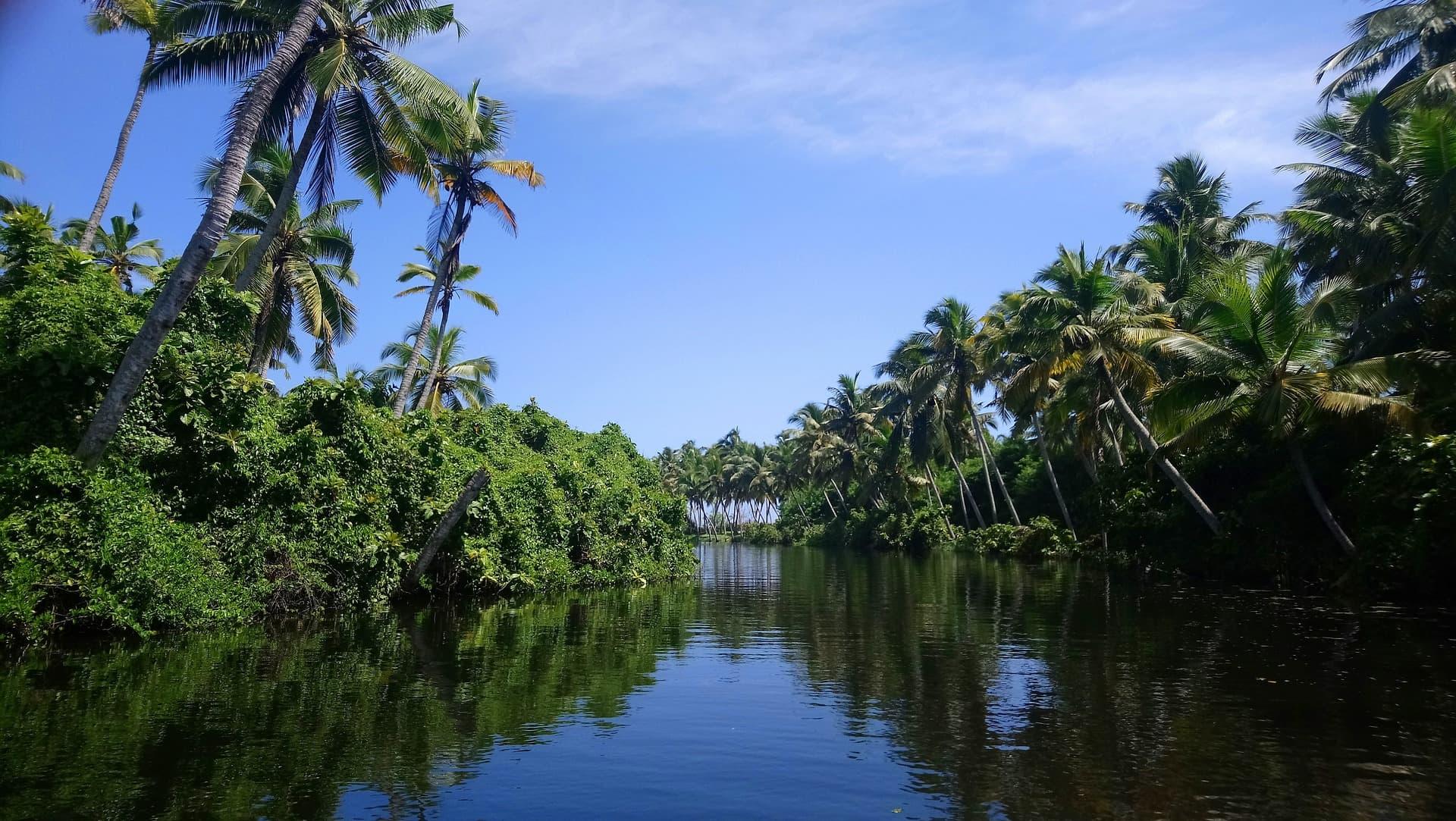 adventour - India - Kerala backwaters trees