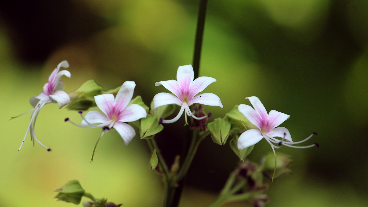 adventour - India - Kerala flowers