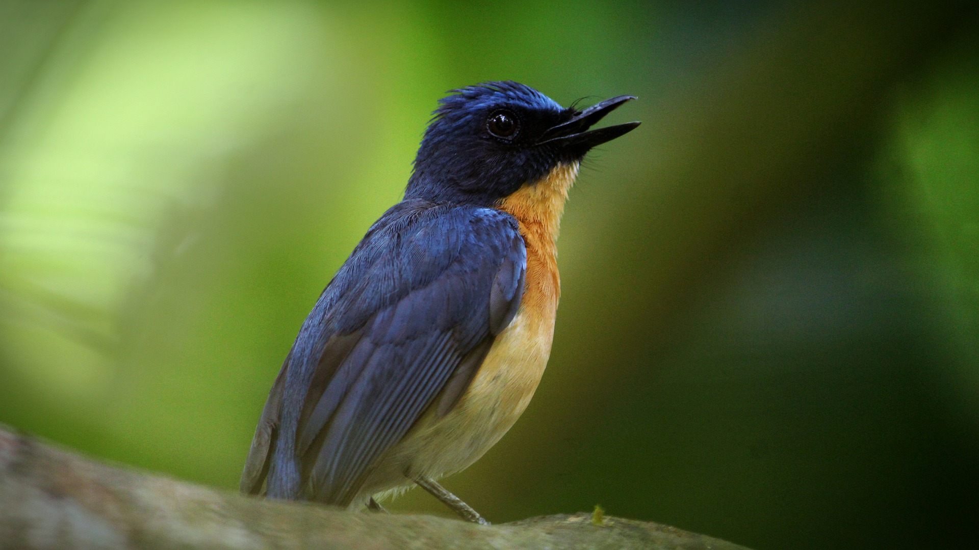 adventour - India - Kerala bird
