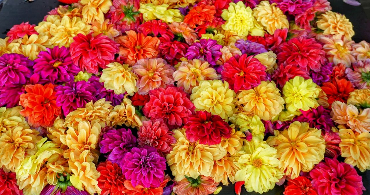 Adventour - India - Gange - Varanasi - flowers