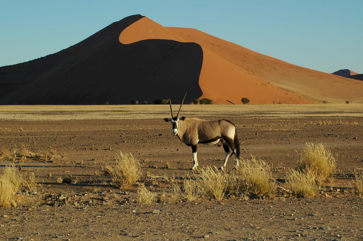 Africa - Namibia - deserto - duna 45 Sossusvlei