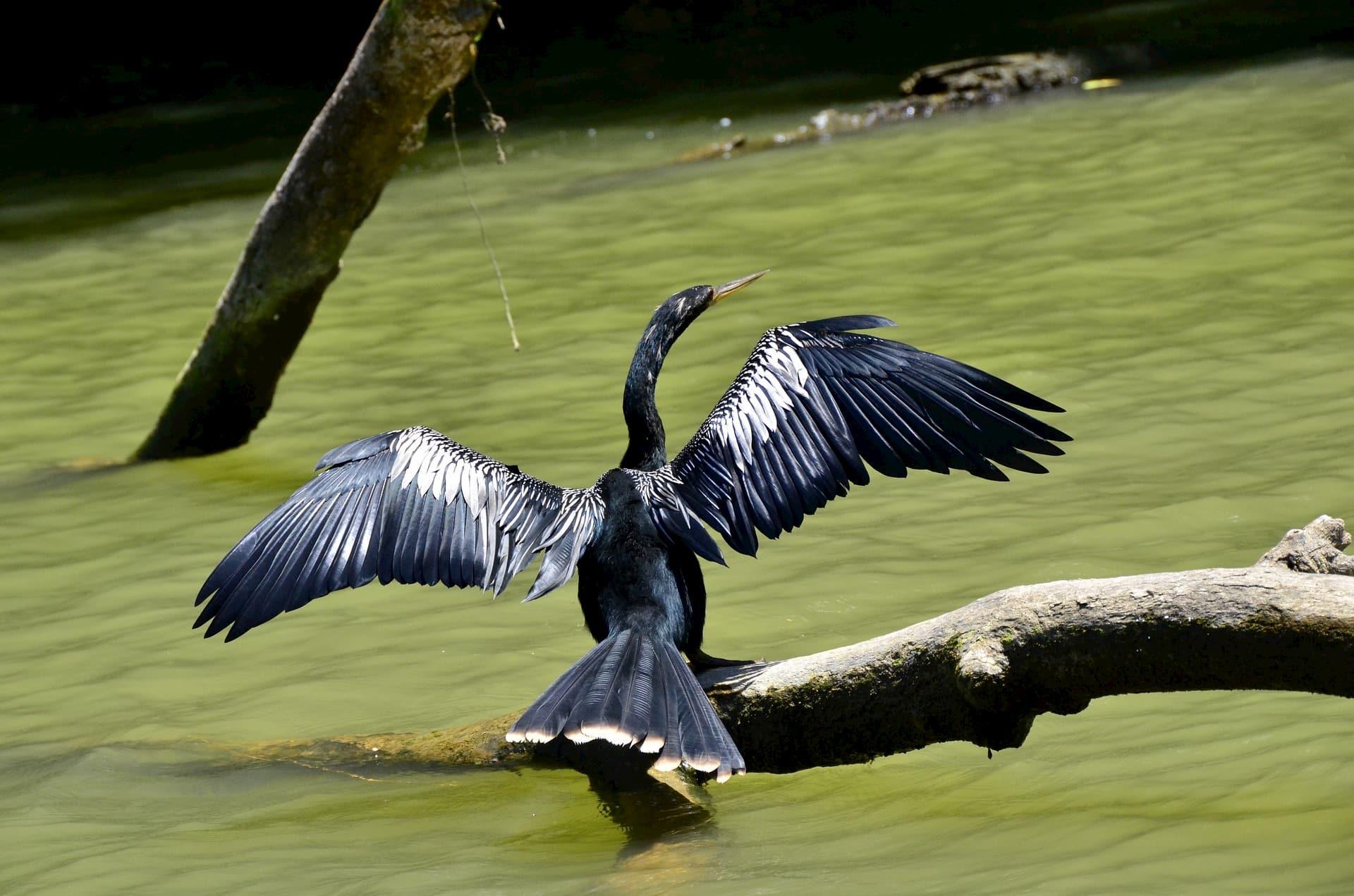 Adventour - Costa Rica - tortuguero - birds