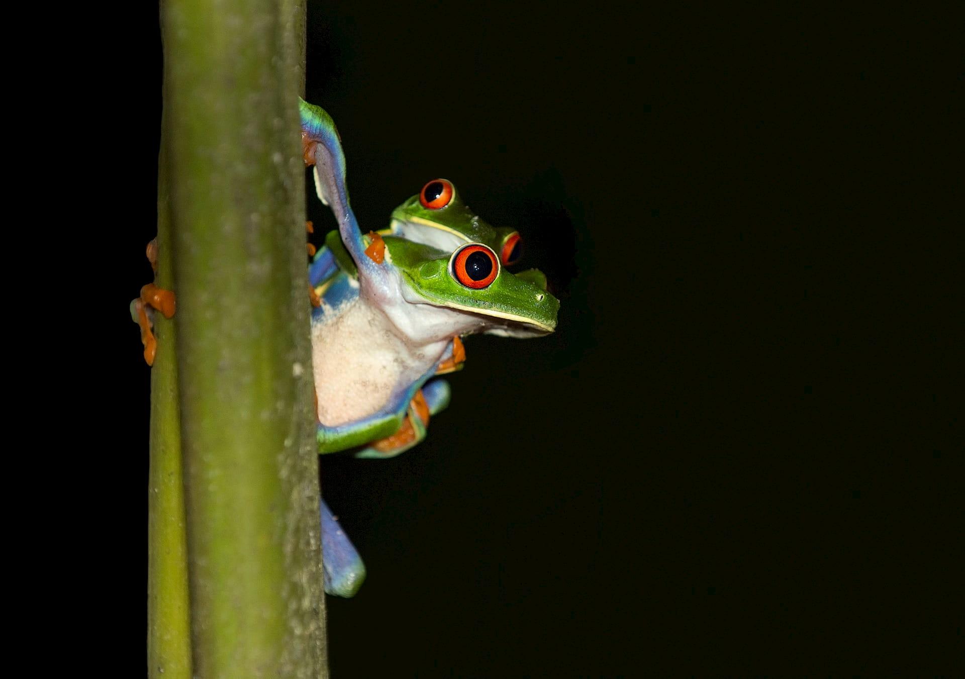 Adventour - Costa Rica - tortuguero