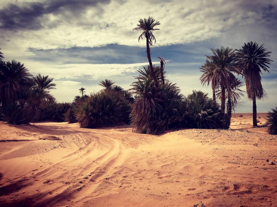 Marocco del Sud - Oasi nel Deserto - Adventour - Viaggi su Misura. Adventour - Viaggi su misura verso Marocco, India, Sudafrica, Botswana, Costa Rica.