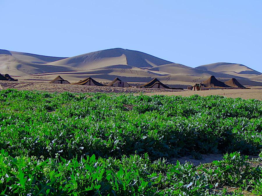 Marocco - dune dell' Erg Chegaga dopo una pioggia eccezionale. Adventour - Viaggi su misura verso Marocco, India, Sudafrica, Botswana, Costa Rica.