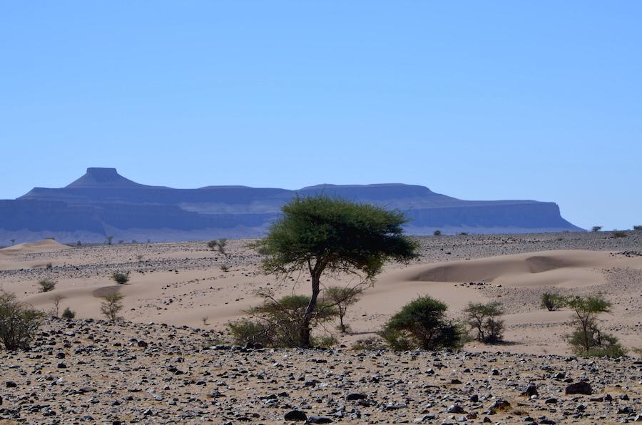 Paolo Marabini in viaggio in Marocco sulla vecchia pista della Parigi-Dakar Adventour - Viaggi su misura verso Marocco, India, Sudafrica, Botswana, Costa Rica.