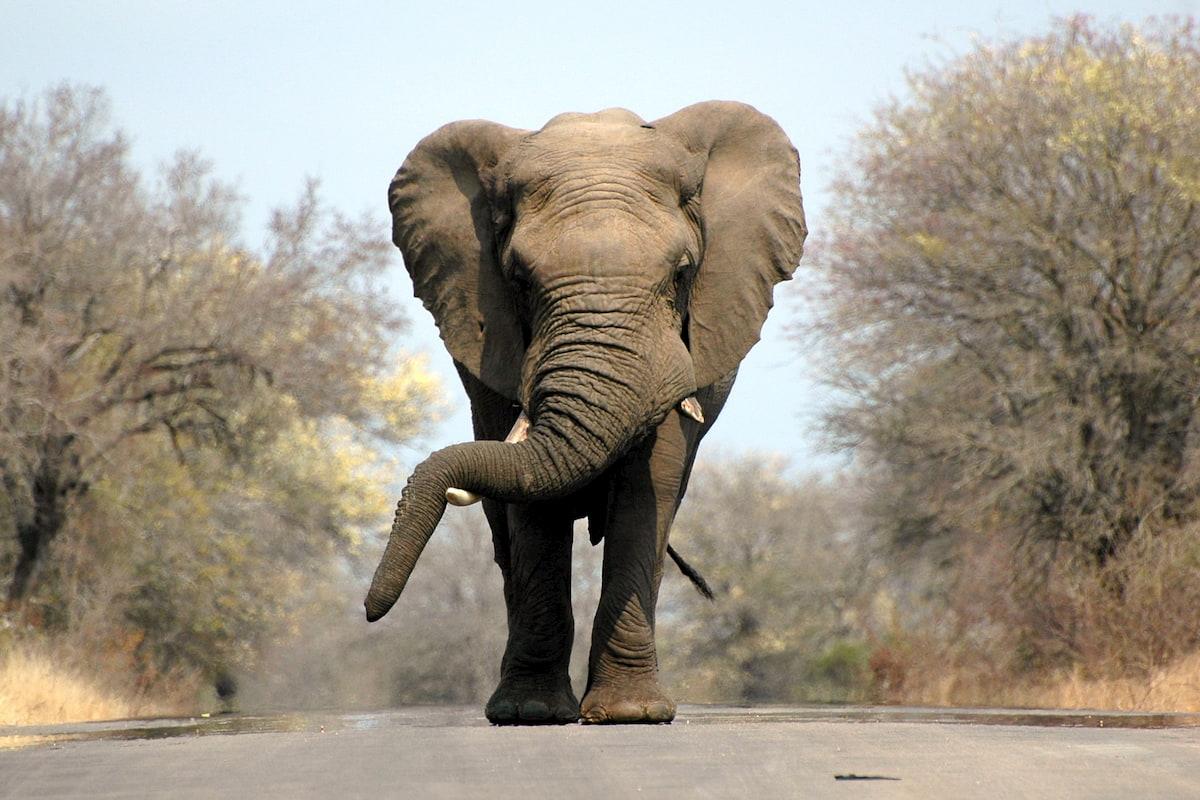 Africa - elefante