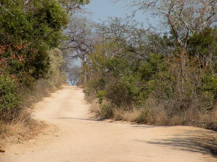 Adventour - Sudafrica - safari