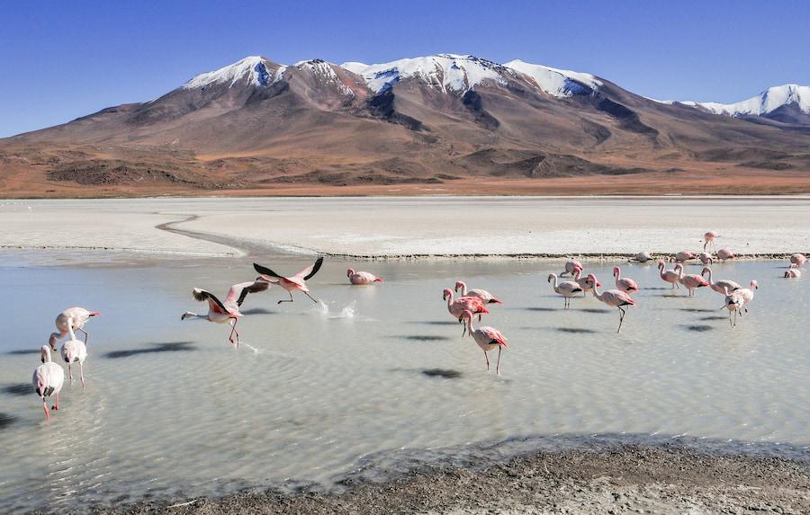 Adventour - Bolivia - Salar Uyuni