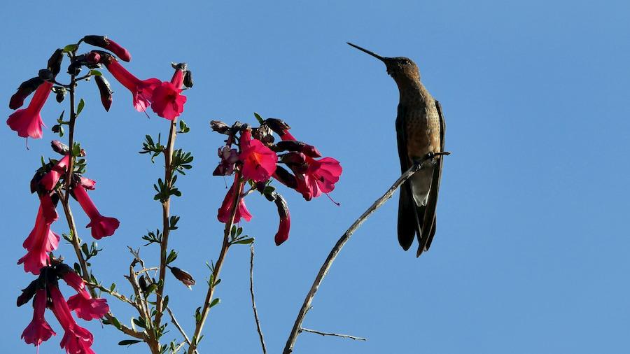 Adventour - Bolivia - colibri