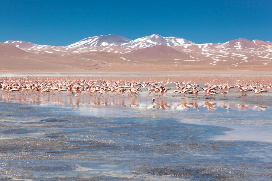 Adventour - Bolivia - fenicotteri laguna colorada