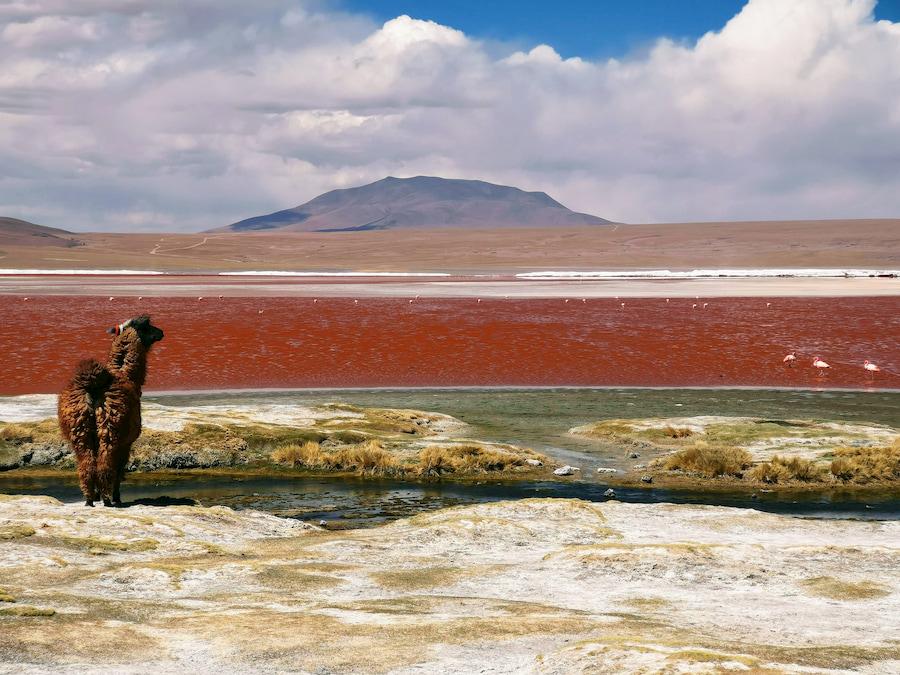 Adventour - Bolivia - Sud Lipez