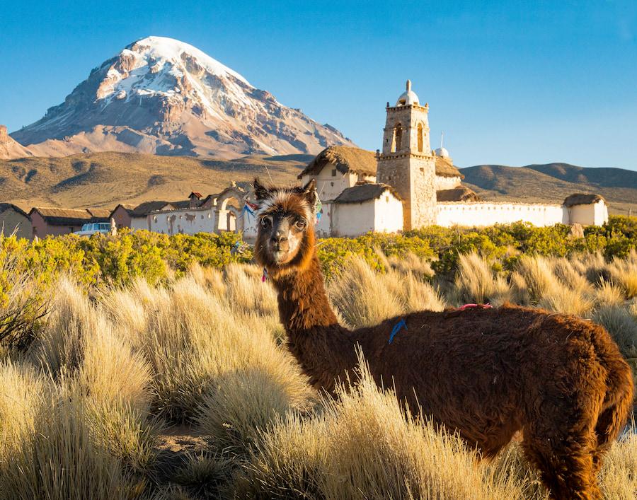 Adventour- Bolivia - Sayama National Park