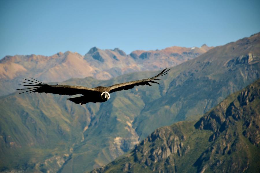 Adventour - Perù - Condor