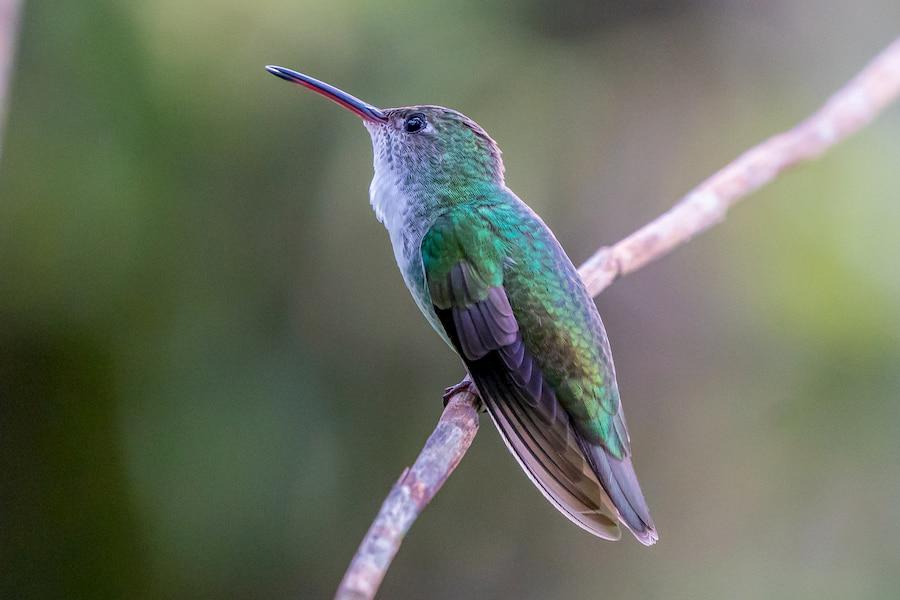 Adventour - Perù - fauna