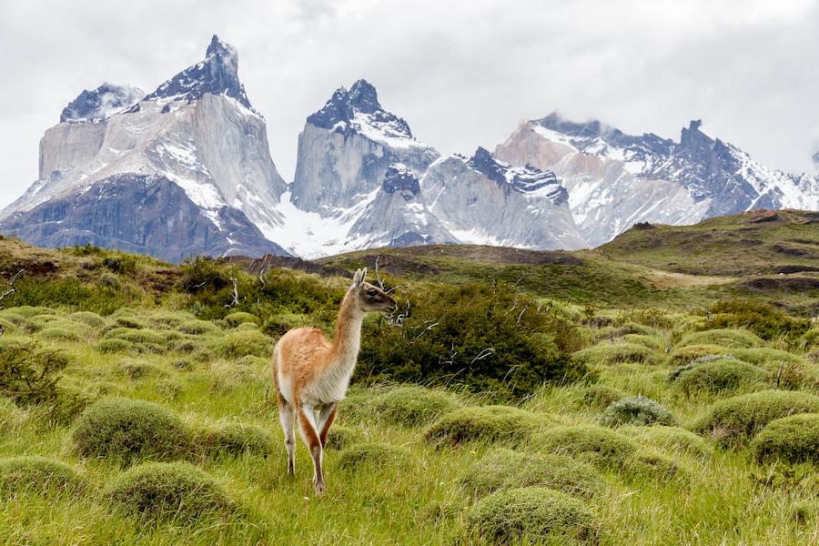 Adventour - Patagonia - Torres del Paine animali